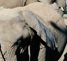 Two Elephants Closeup by PatiDesigns