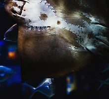 Bottom Of A Ray Fish by PatiDesigns