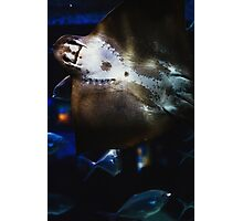 Bottom Of A Ray Fish Photographic Print