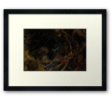 Eggs in a nest Framed Print