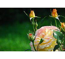 Flower in the Garden Photographic Print