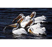 White Pelicans Portrait Photographic Print