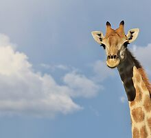Giraffe - Posture of Blue - African Wildlife Background  by LivingWild