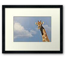 Giraffe - Posture of Blue - African Wildlife Background  Framed Print
