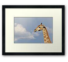 Giraffe - Beautiful Blue - African Wildlife Background  Framed Print