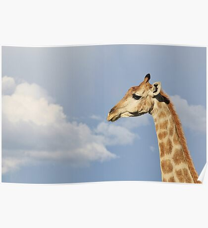 Giraffe - Beautiful Blue - African Wildlife Background  Poster