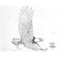 On the rise of an updraft Bald Eagle soars Photographic Print