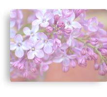 Pale Lilac Canvas Print