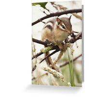 Chipmunk... Greeting Card