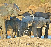 Elephant - Joy of Water - African Wildlife Background  by LivingWild