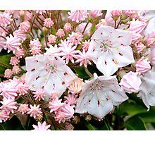 Spring flower Photographic Print