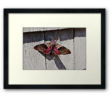 The Moth Series V Framed Print