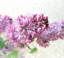 Luscious Lilacs by Diane Arndt