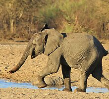 Elephant - Run of Youth - African Wildlife Background  by LivingWild