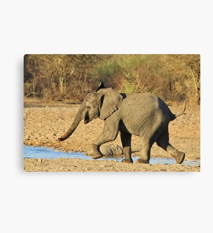 Elephant - Run of Youth - African Wildlife Background  Canvas Print