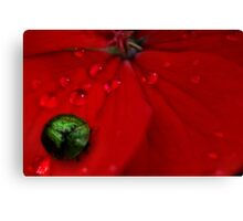 The tiniest spade bug Canvas Print
