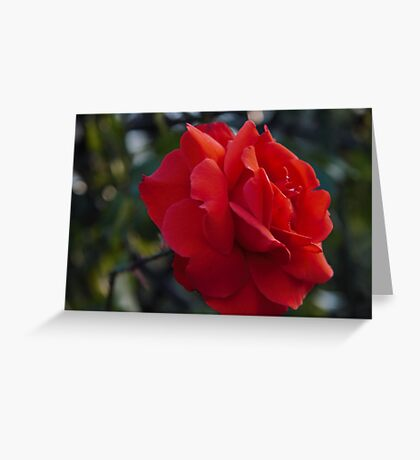 My love is like a red red, rose – wisley Greeting Card