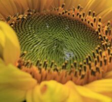Giant gold sunflower crown and petals – 1 -Losely Sticker