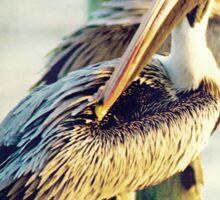 Pelican Sticker