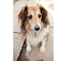 Big Puppy Eyes Photographic Print