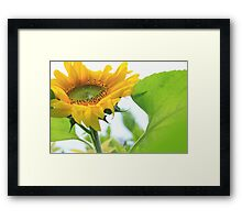 Giant gold sunflower crown and petals – 2 – Losely Framed Print