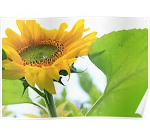 Giant gold sunflower crown and petals – 2 – Losely Poster
