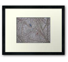 Bluebird and Cardinal in a snow storm Framed Print