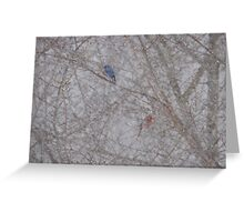 Bluebird and Cardinal in a snow storm Greeting Card