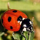 Lady Bug by lmulholland