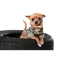 Tire Dog Photographic Print