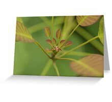 Water droplet on leaves Greeting Card