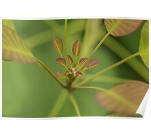 Water droplet on leaves Poster