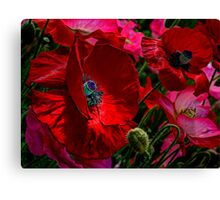 All About The Reds ~ Poppies ~ Canvas Print