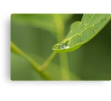 Droplet on a leaf Canvas Print