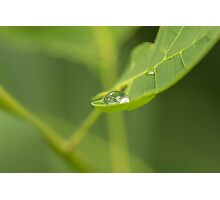 Droplet on a leaf Photographic Print