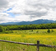 Yellow flowers in New Hampshire by MaryAnn Moore-Bock