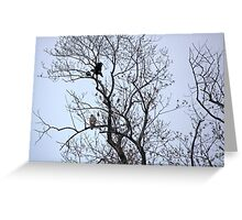 Avian Quarrel in Early Spring Greeting Card