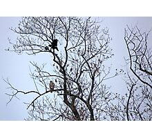 Avian Quarrel in Early Spring Photographic Print