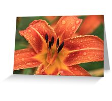 Day Lily In The Rain Greeting Card