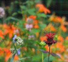 Standing Out In The Crowd  by NatureGreeting Cards ©ccwri