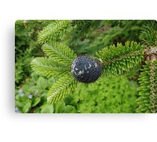 Delavay's Fir Tree Cone Canvas Print