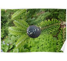Delavay's Fir Tree Cone Poster