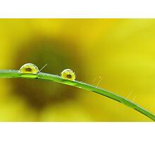 Natures Magnifier Photographic Print