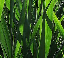Reed Blades by RVogler