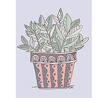 Potted Plant Photographic Print