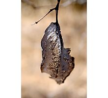 Almost Transparent leaf Photographic Print