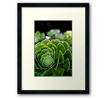 The Beauty of nature -Macro Framed Print