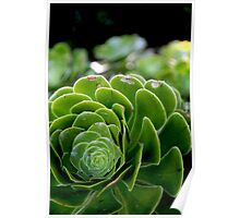 The Beauty of nature -Macro Poster