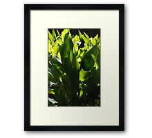 The Beauty of nature & Lighting -Macro Framed Print