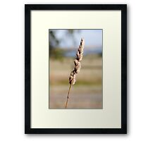 Beauty Is Everywhere In Life  Framed Print